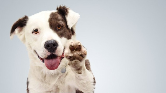 adotando-um-cachorrinho-1024x576